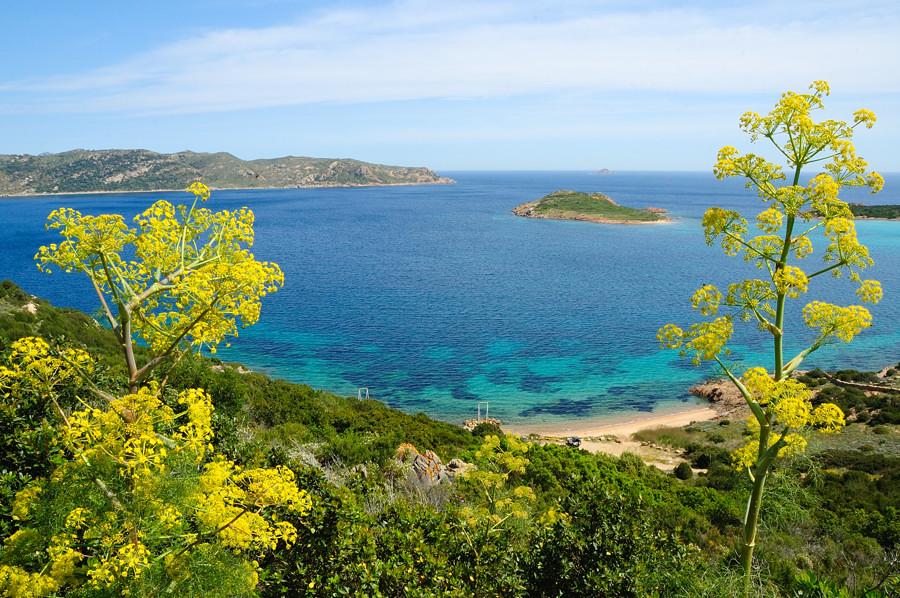 Flora Sardegna
