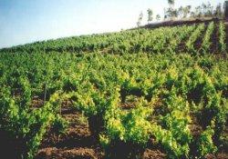 vigneti sardegna vini tipici